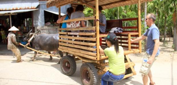Horse or buffalo tour